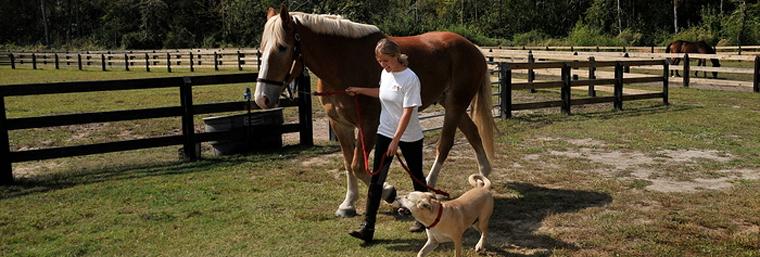 Horse Farm Horse Boarding Camden Nc Silver Star Farm